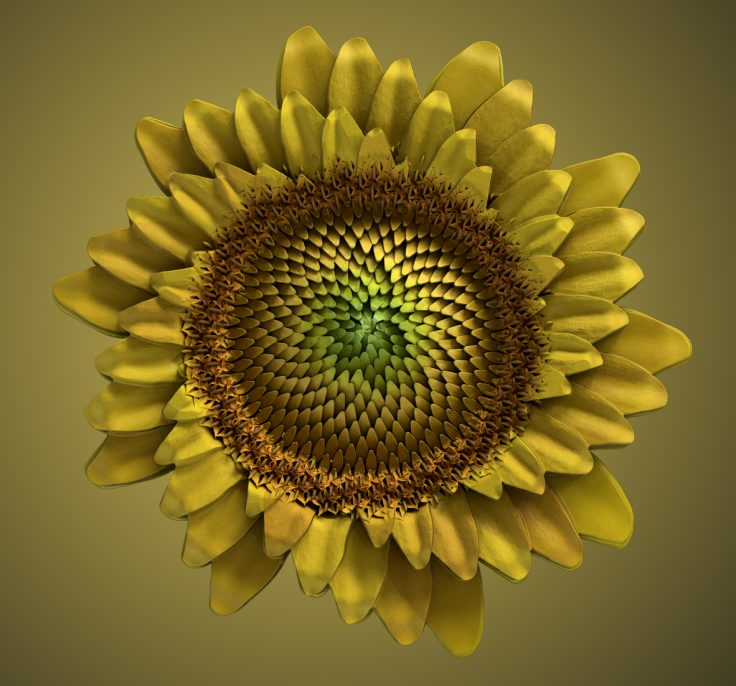 sunflower_main